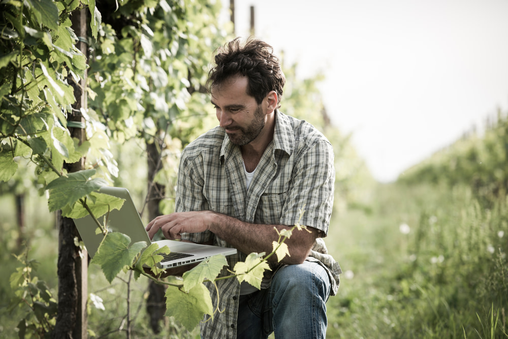 Vinproducent
